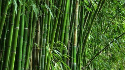 Bamboos Market
