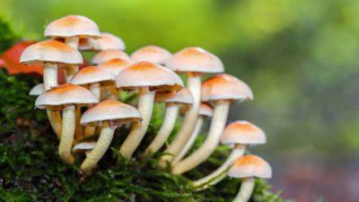 Mushrooms Market