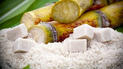Alcohol, and Sugar/Starch Enzymes Market
