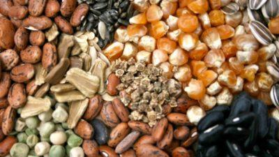 Bioactive Ingredients Market