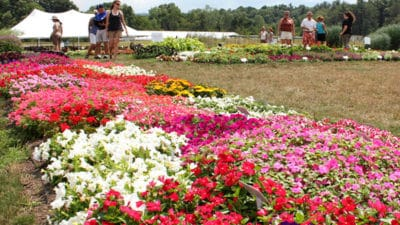 Floriculture Market