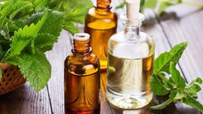 Herb Oil Market