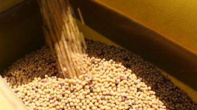Distillers Grains Market
