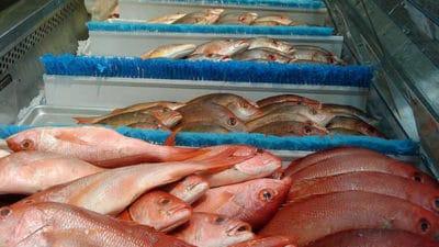 Fish Processing Market