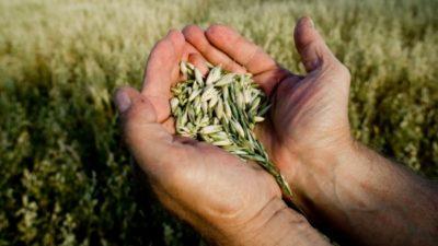 Forage Seeds Market