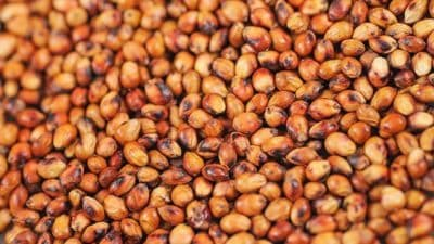 Sorghum Seed Market