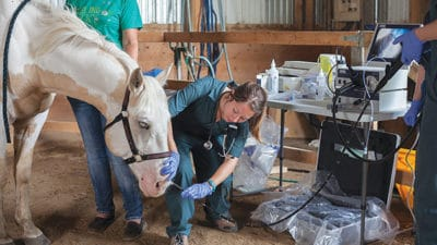 Equine Fluid Therapy Market