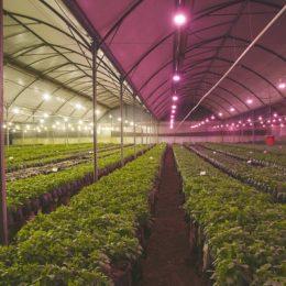 Global Horticulture Lighting Market to Register Revenue CAGR of 21.4% Over Next 10 Years