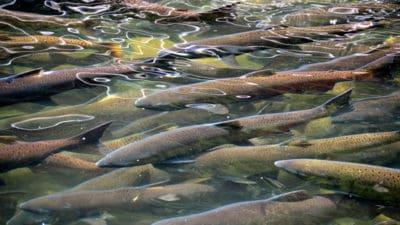 Aquaculture Food Eubiotics Market