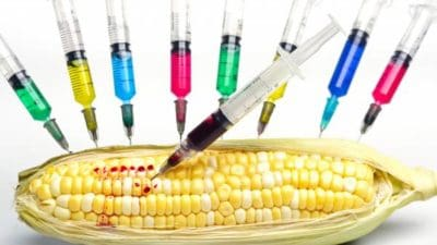 Genetically Modified Organisms Food Market