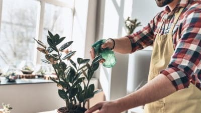 Household Insecticides Market
