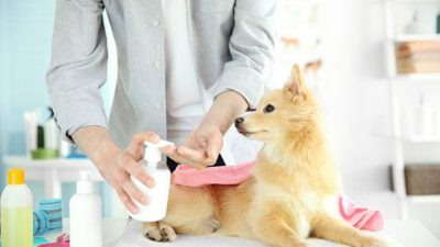 Pet Grooming Products Market