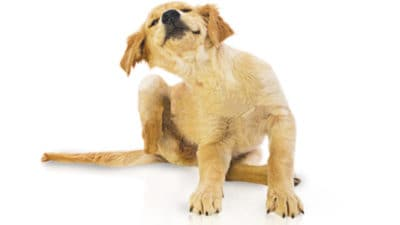 Flea and Tick Product Market