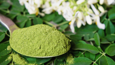 Moringa Products Market