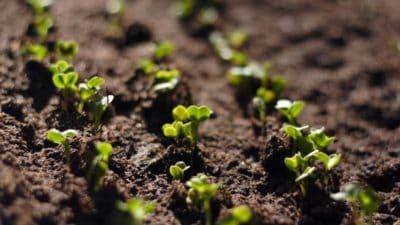 Agricultural Testing Market