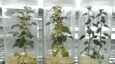 Plant Cell Culture Equipment Market