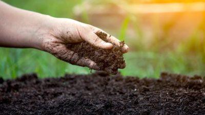 Manufactured Soil Market