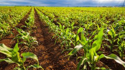 Smart Harvest Market