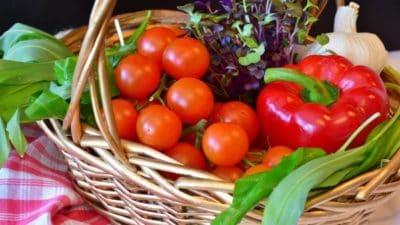 Vegetable Seeds Market