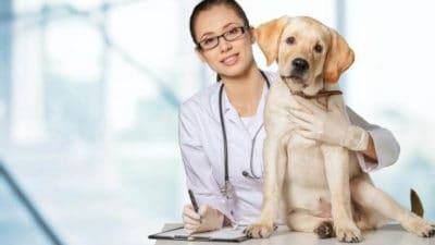 Animal Pharmaceuticals Market