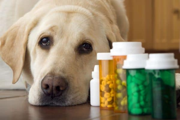 Global Pet Dietary Supplements Market Size, Share, Growth Analysis 2028