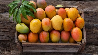 Processed Mango Products Market