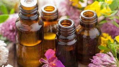 Essential Oils & Plant Extracts for Livestock Market