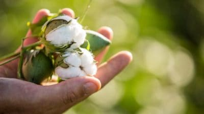 Natural Cotton Extract Market