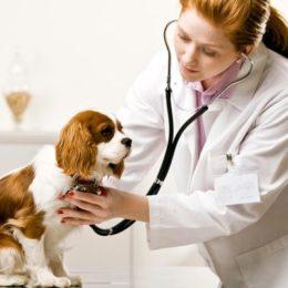 Global Veterinary Medicine Market