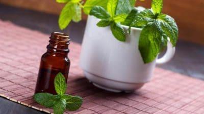 Mint Essential Oils Market