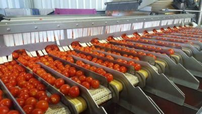 Automated Food Sorting Machines Market