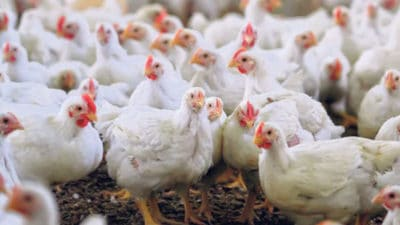 Poultry Diagnostics Market