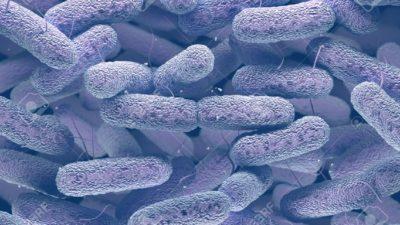 Bacterial Antigens Market
