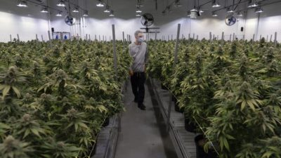 Australia Legal Cannabis Market