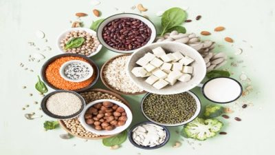 North America Plant Proteins Market