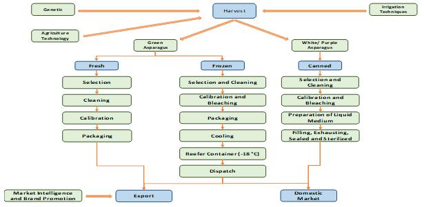 Asparagus Production Chain